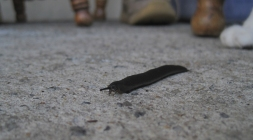 Slug and Paul's paw
