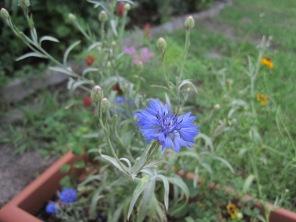Blue thistle-like flower.