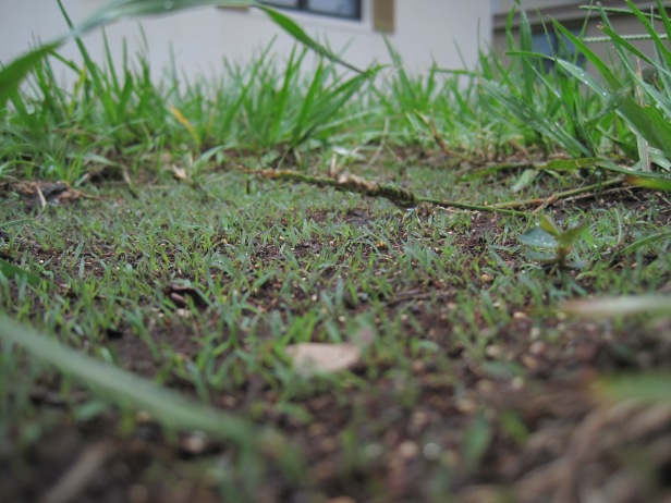 Close up of the baby grass!